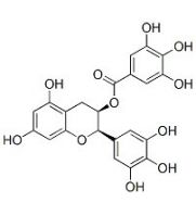 (-)-Epigallocatechin Gallate: sc-200802...