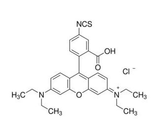 Rhodamine B isothiocyanate: sc-219968...